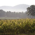 North Carolina celebrates Wine and Grape Month in September